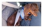 Hold-A-Dog Harness® in Fabric & Mesh