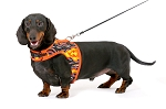 Hug-A-Dog Harness® in Fabric & Mesh