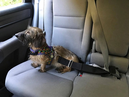 Doggie Catcher Seat Belt
