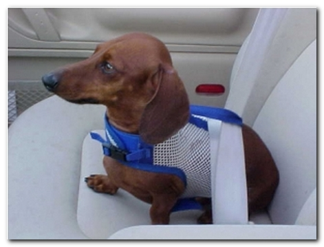 Hold-A-Dog Harness® (in mesh)
