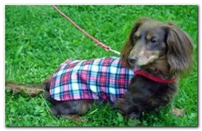 Hug-A-Dog Harness® Dachshund Raincoat